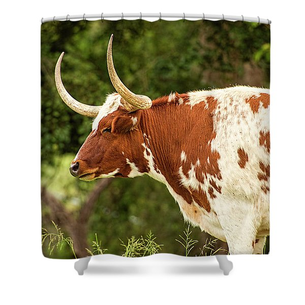 Shower Curtain featuring the photograph Longhorn Bull In The Paddock by Rob D Imagery