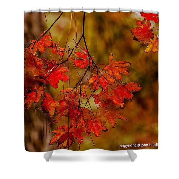 A Branch Of Autumn Shower Curtain