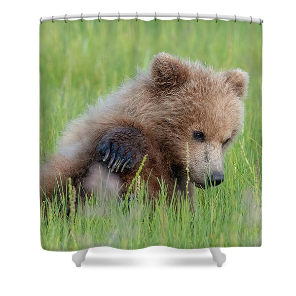 A Coy Cub Shower Curtain