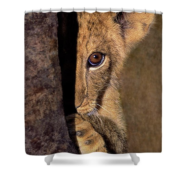 A Lion Cub Plays Hide And Seek Wildlife Rescue Shower Curtain