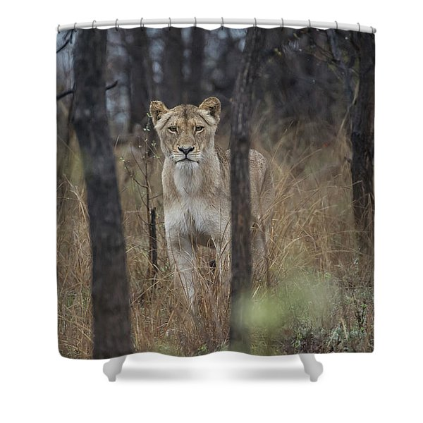 A Lioness In The Trees Shower Curtain