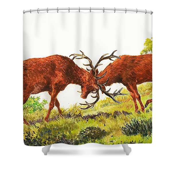 A Pair Of Red Deer Rutting Shower Curtain