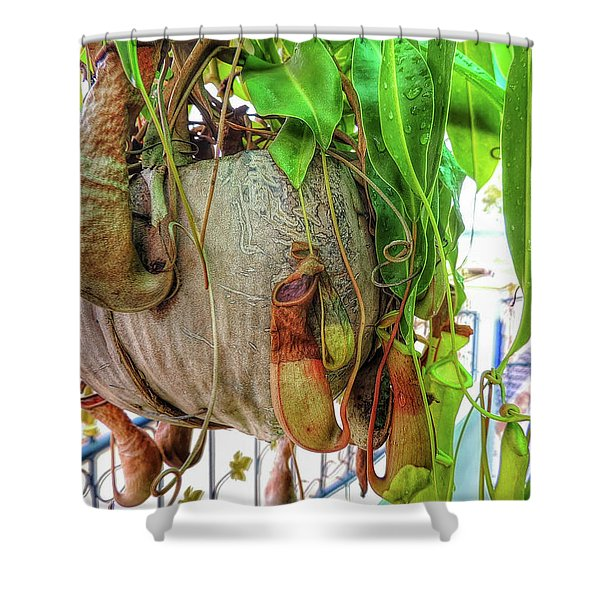 A Pitcher Plant On Our Terrace In Thailand Shower Curtain
