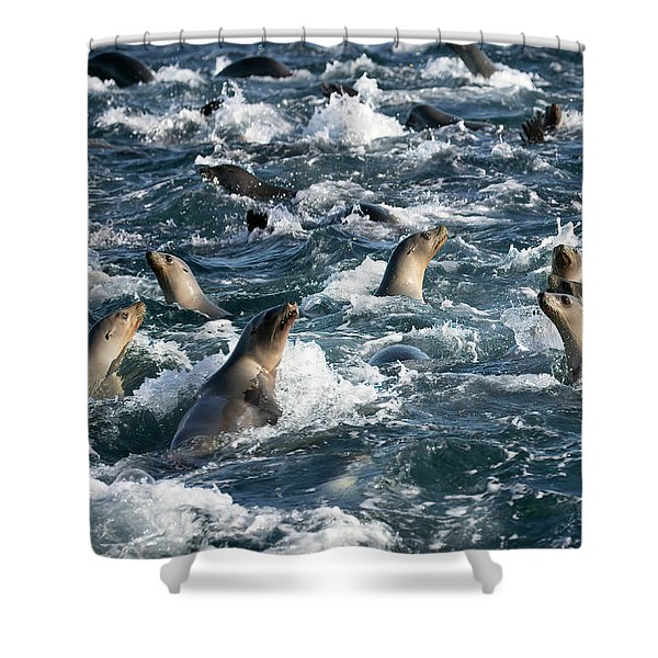 A Raft Of Sea Lions Shower Curtain
