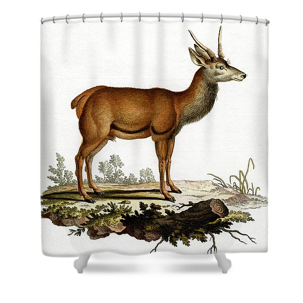 A Red Deer Coloured Engraving Shower Curtain