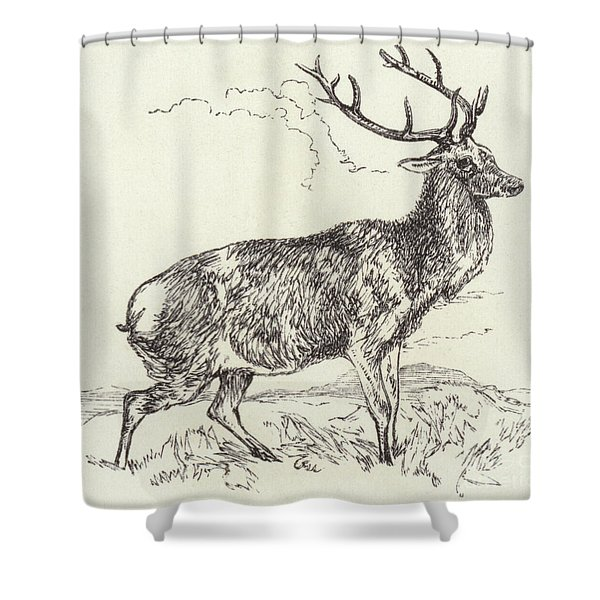 A Red Deer  Engraved Shower Curtain