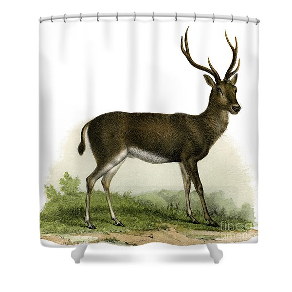 A Red Deer In A Landscape, 1860 Shower Curtain