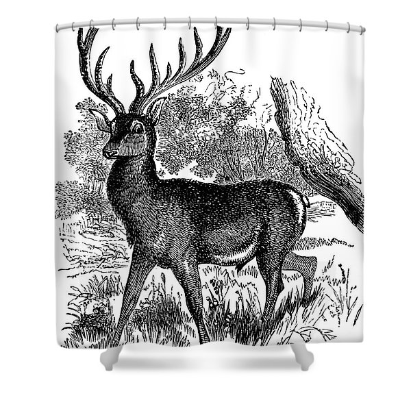 a Red Deer in a Landscape Shower Curtain