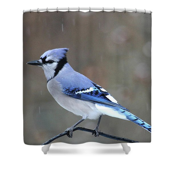 A Snowy Day With Blue Jay Shower Curtain