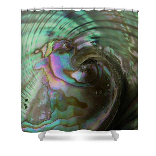 Abalone_shell_9903 Shower Curtain