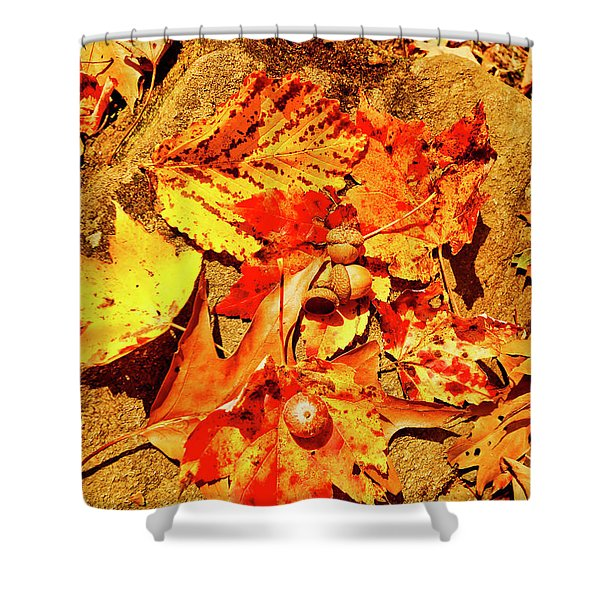 Shower Curtain featuring the photograph Acorns Fall Maple Oak Leaves by Meta Gatschenberger