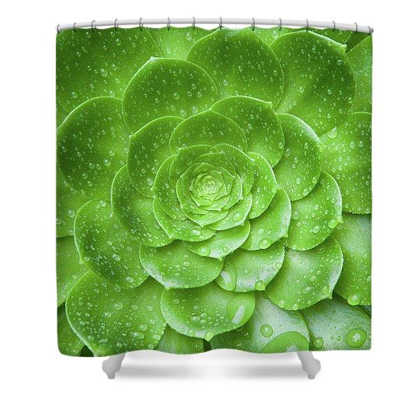 Aenomium 3916 Shower Curtain