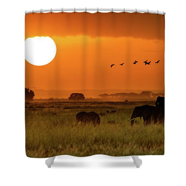 African Elephants Walking At Golden Sunrise Shower Curtain