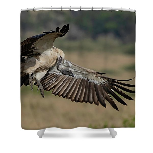 African White-backed Vulture Shower Curtain