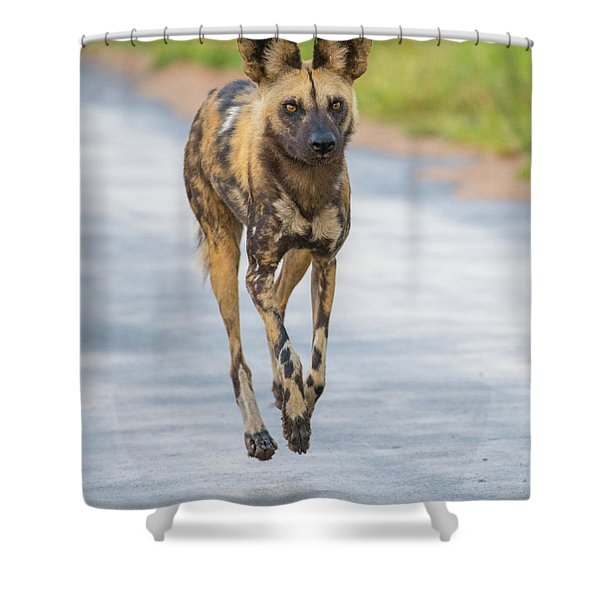African Wild Dog Bouncing Shower Curtain