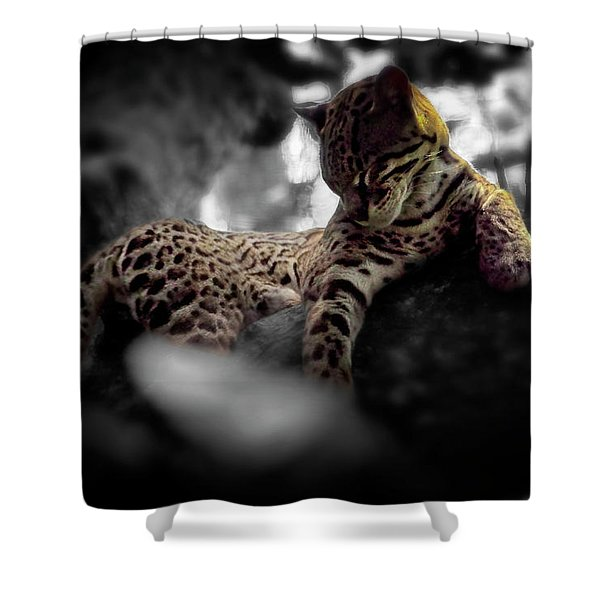 Afternoon Rest Shower Curtain