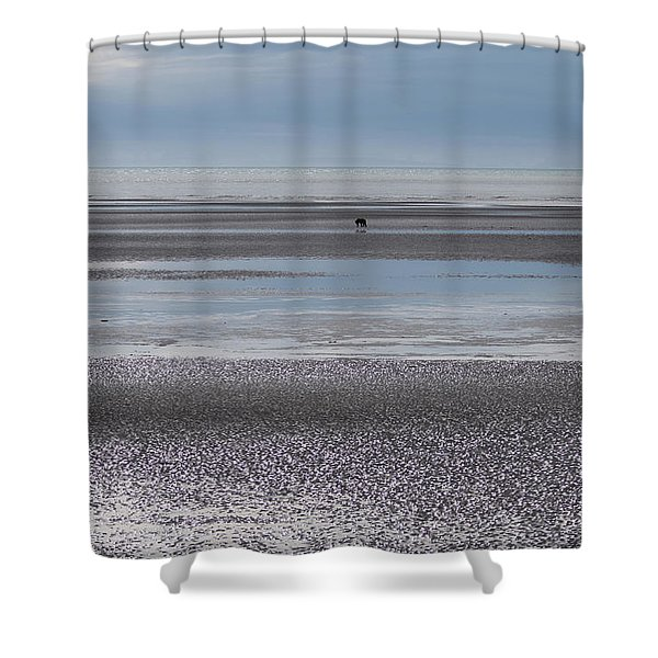 Alaska Brown Bear On The Shore Shower Curtain