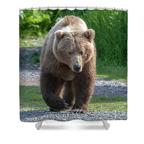 Alaskan Brown Bear Walking Towards You Shower Curtain