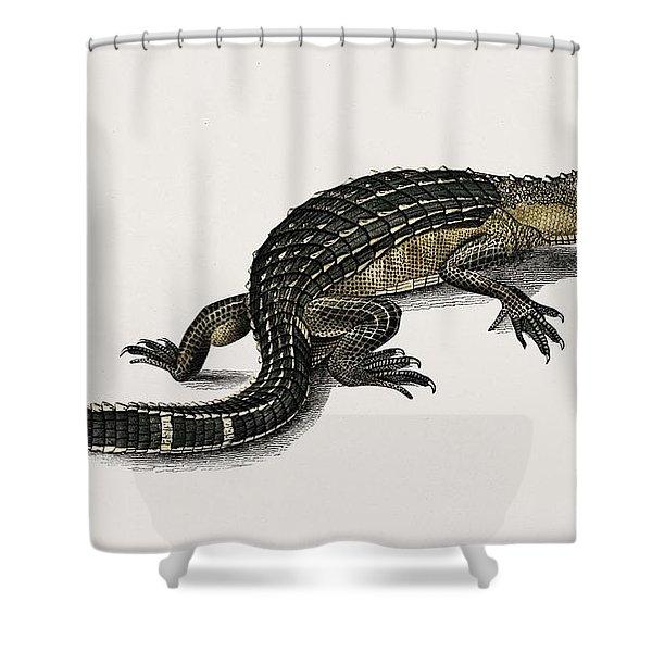 Alligator  Alligator Incius Illustrated By Charles Dessalines D' Orbigny  1806-1876  Shower Curtain