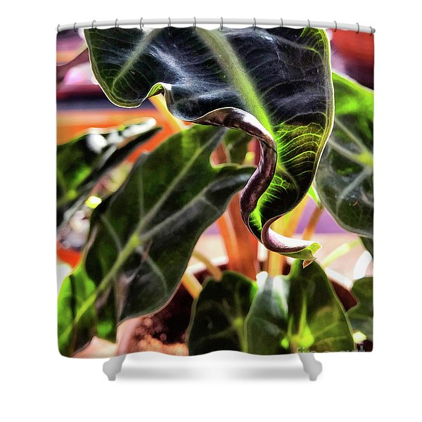 Alocasia Polly Shower Curtain