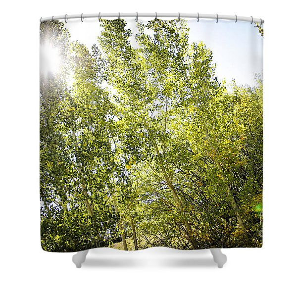 Alpine Sunlight In The Rockies Shower Curtain