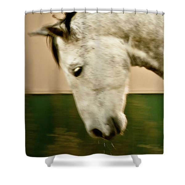 Shower Curtain featuring the photograph Americano 14 by Catherine Sobredo