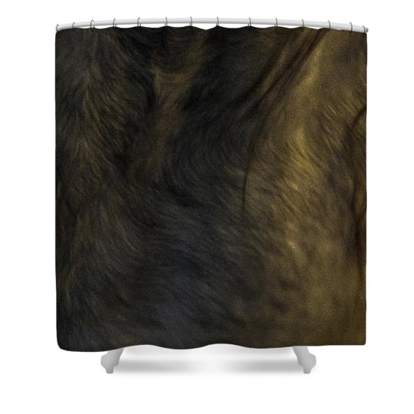 Shower Curtain featuring the photograph Americano 20 by Catherine Sobredo