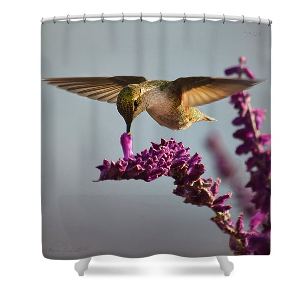 Anna's Hummingbird Sipping Nectar From Salvia Flower Shower Curtain