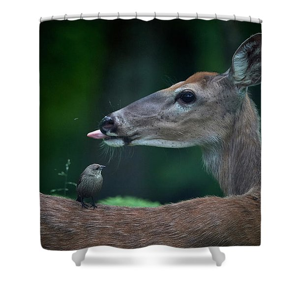 Another Deer Shower Curtain
