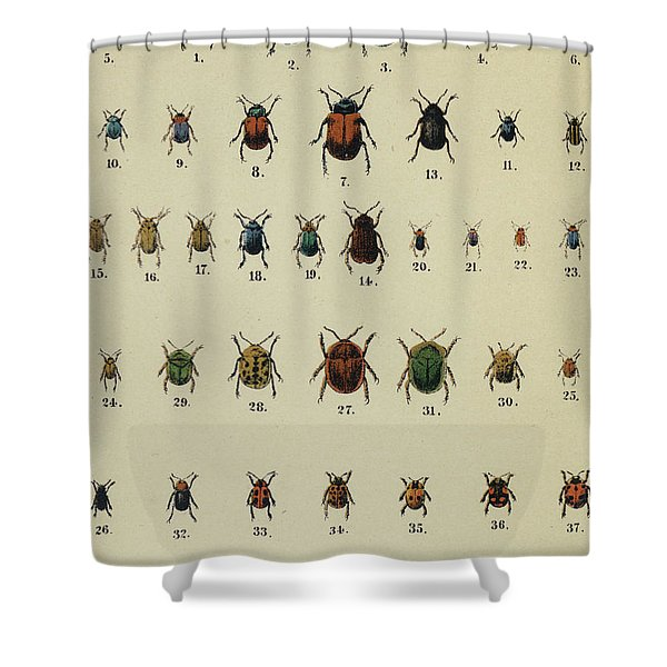 Antique Insect Print Shower Curtain