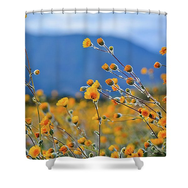 Anza Borrego Wild Desert Sunflowers Shower Curtain