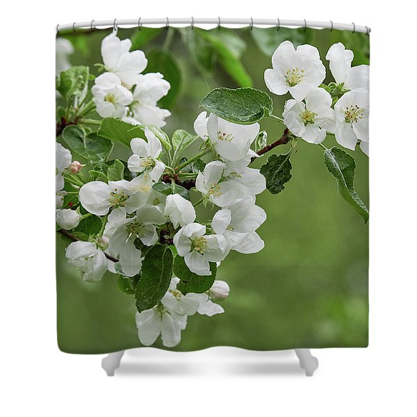 Apple Tree White Blossom Shower Curtain