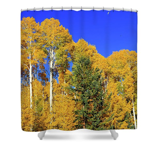 Arizona Aspens And Blowing Leaves Shower Curtain