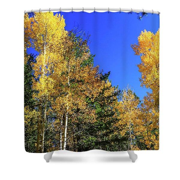 Arizona Aspens In Fall 1 Shower Curtain
