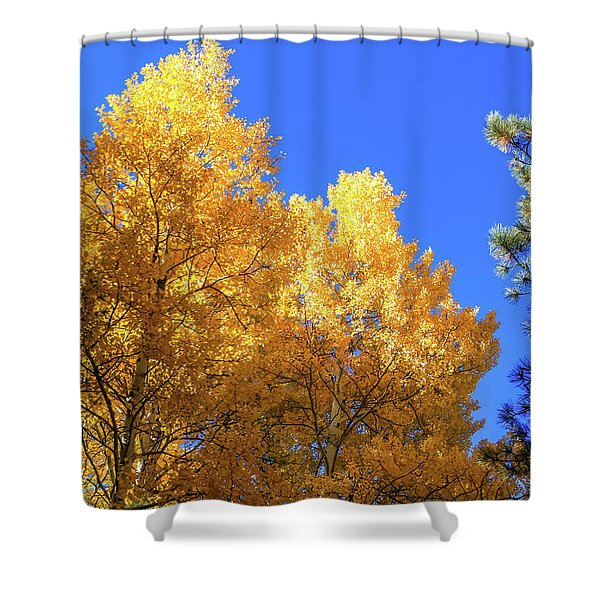 Shower Curtain featuring the photograph Arizona Aspens In Fall 2 by Dawn Richards