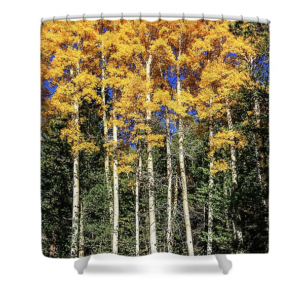 Arizona Aspens In Fall 3 Shower Curtain