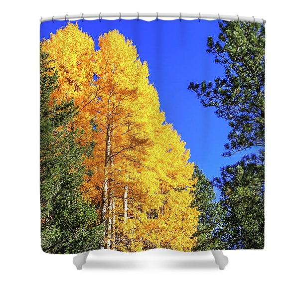 Shower Curtain featuring the photograph Arizona Aspens In Fall 4 by Dawn Richards
