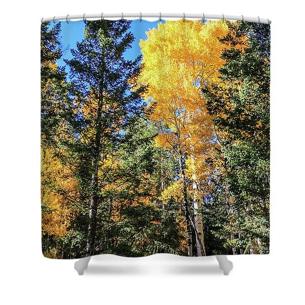 Arizona Aspens In Fall 5 Shower Curtain