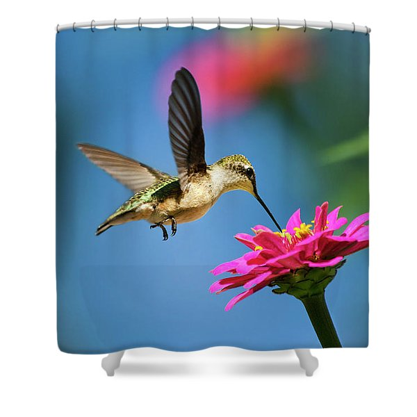 Art Of Hummingbird Flight Shower Curtain