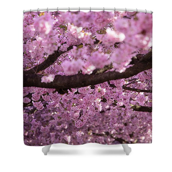 Cherry Blossom Tree Panorama Shower Curtain