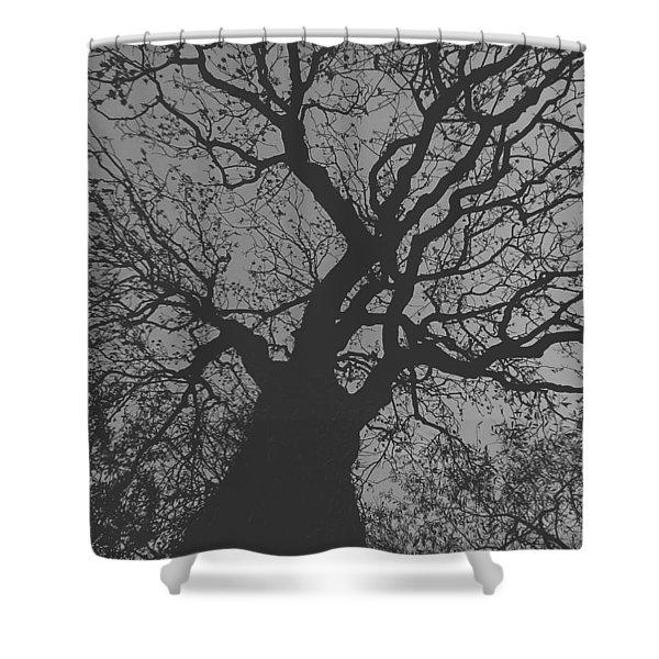 Ash Tree Shower Curtain