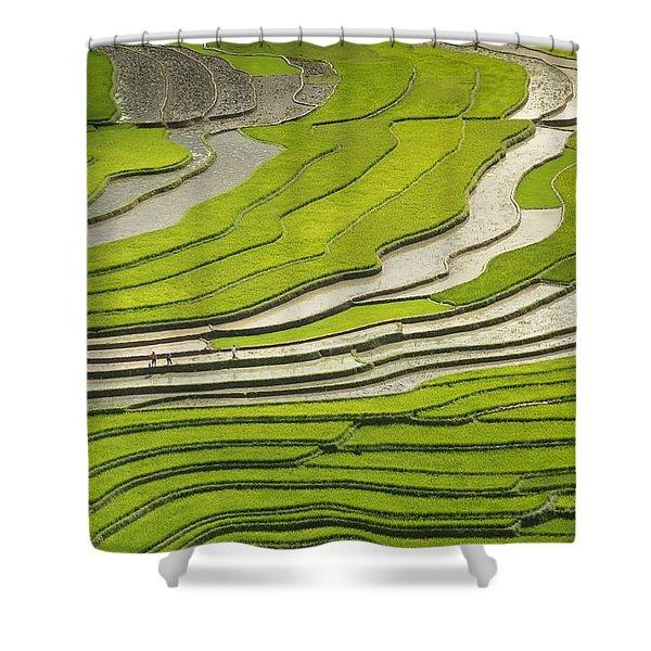 Asian Rice Field Shower Curtain