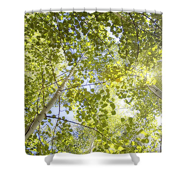 Aspen Canopy With Sun Flare Shower Curtain