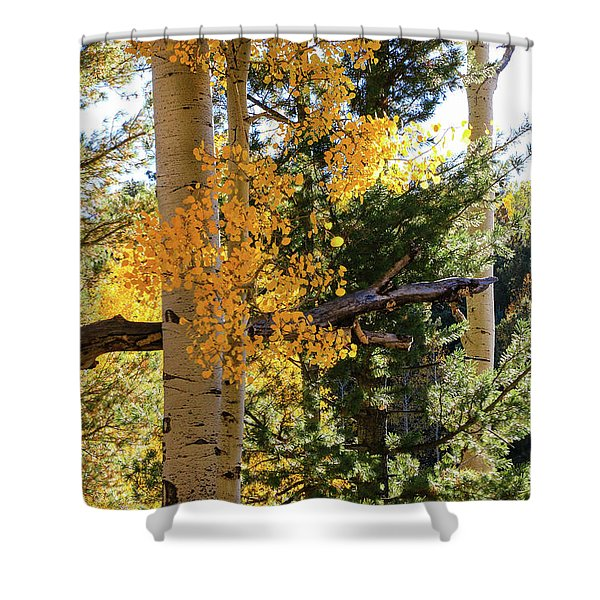 Shower Curtain featuring the photograph Aspen Tree Close by Dawn Richards