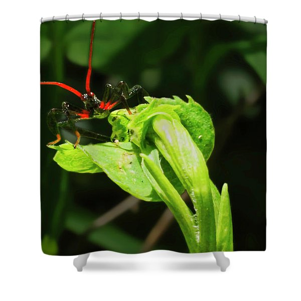 Assassin Bug Shower Curtain