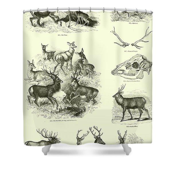 Assorted Deer Shower Curtain