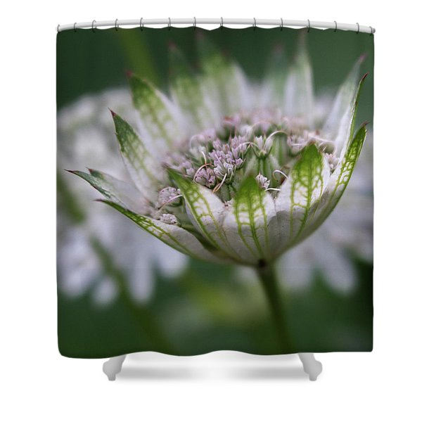 Astrantia Shower Curtain