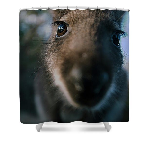 Australian Bush Wallaby Outside During The Day. Shower Curtain