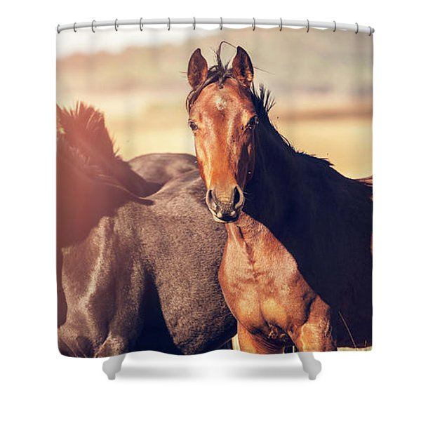 Australian Horses In The Paddock Shower Curtain