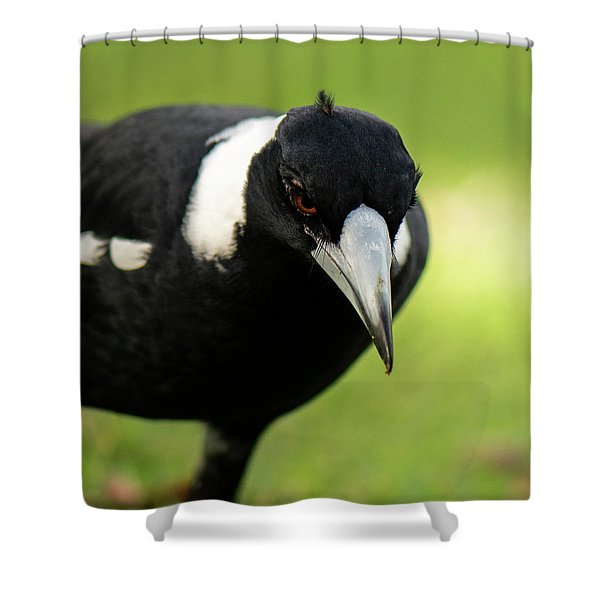 Australian Magpie Outdoors Shower Curtain